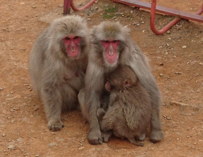 Arashiyama Monkeys